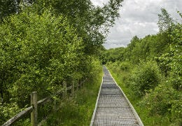 Boardwalk at the Cors Caron Nature Reserve
