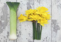A leek and a bunch of daffodils