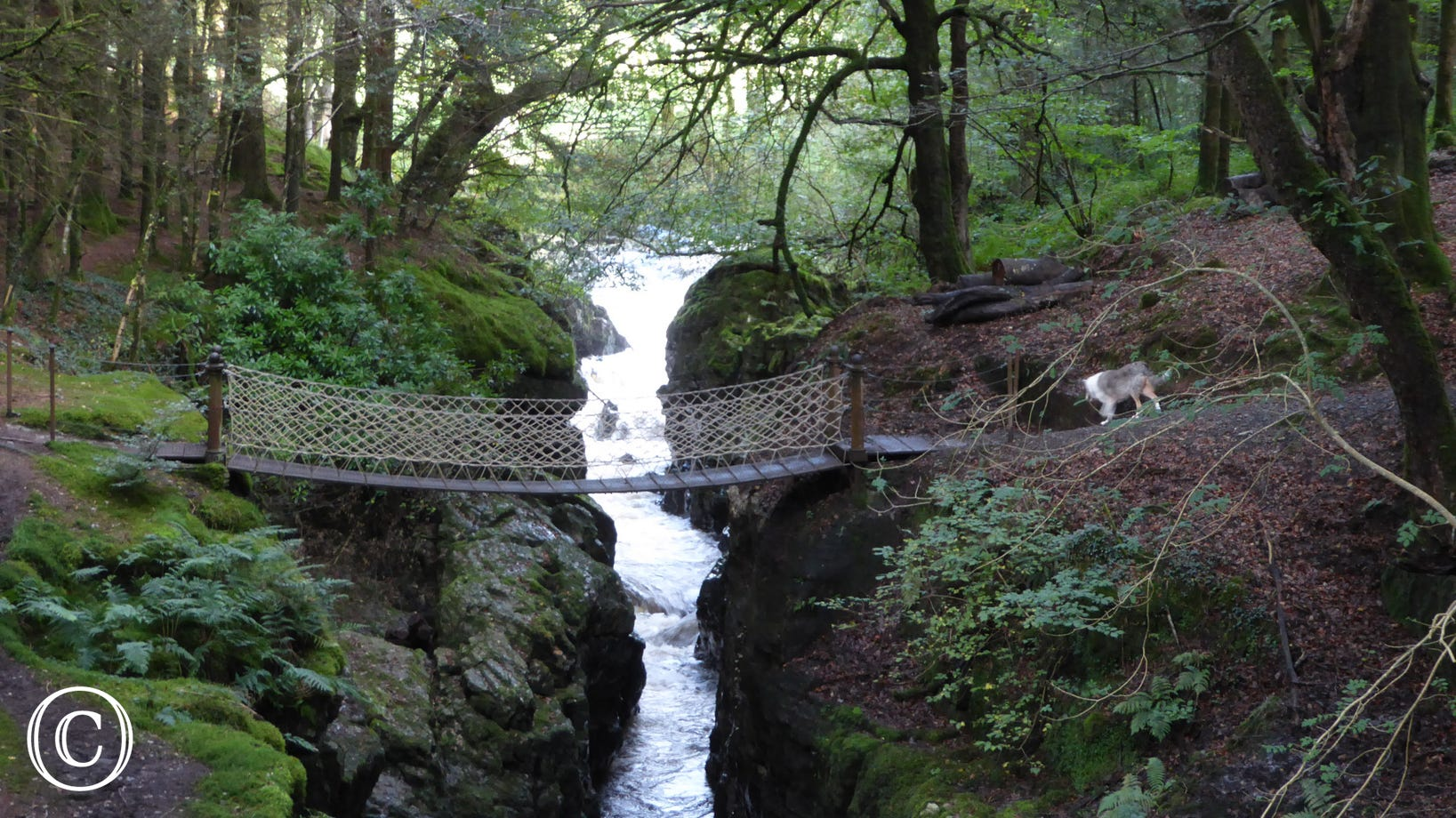 Hafod Estate - dog friendly walk