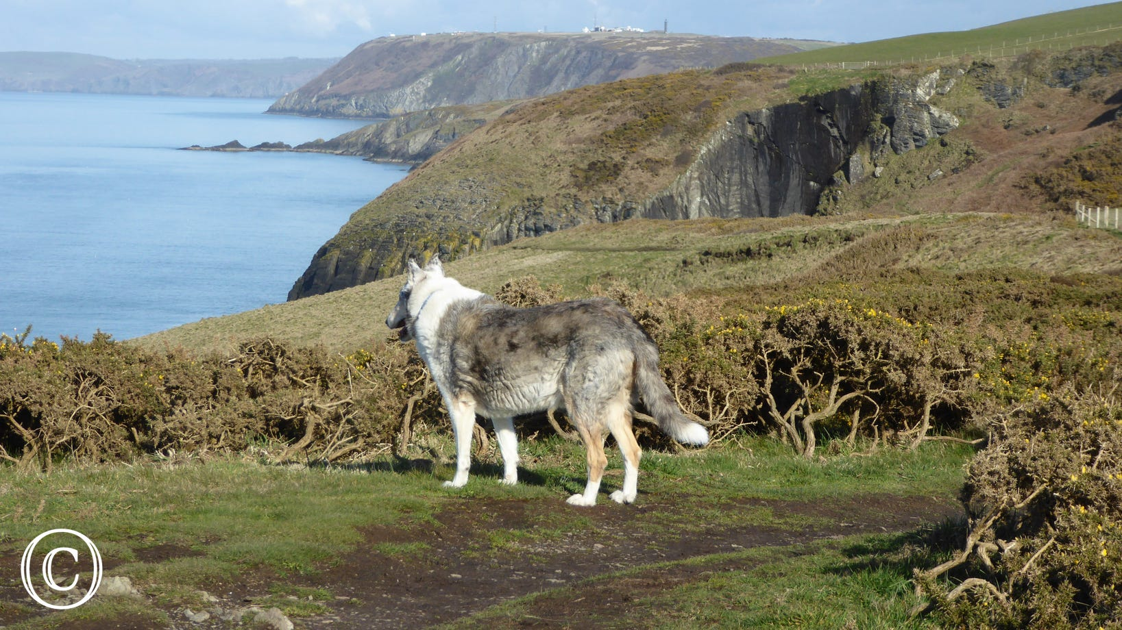 Dog-friendly coastal walks