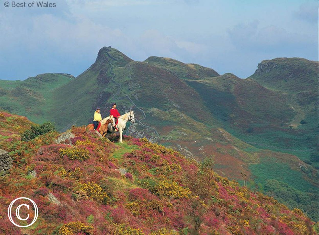 Enjoy some pony trekking during your working farm holidays in Wales