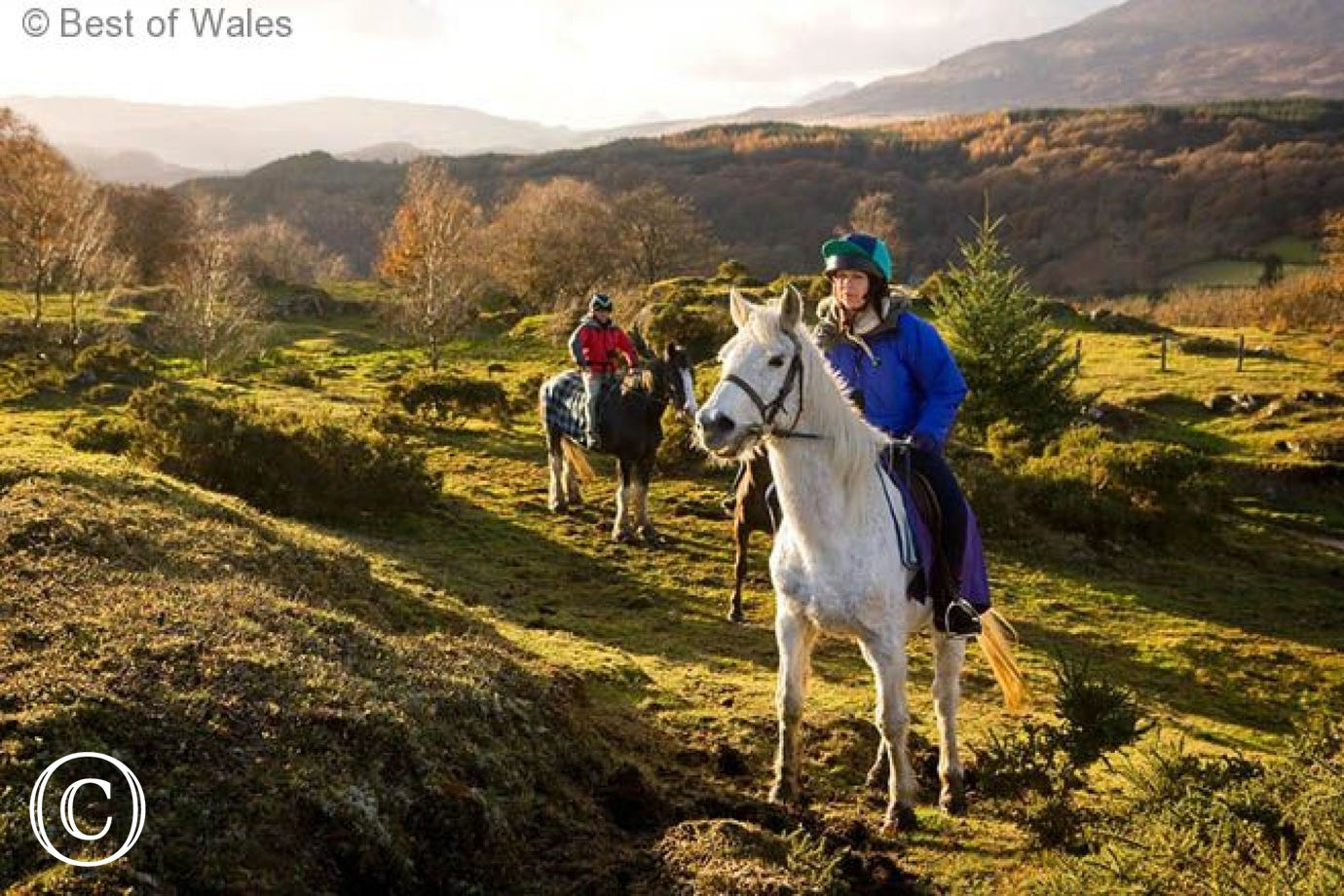 Horse riding available locally at Gwydyr Stables, Penmachno (2 miles)
